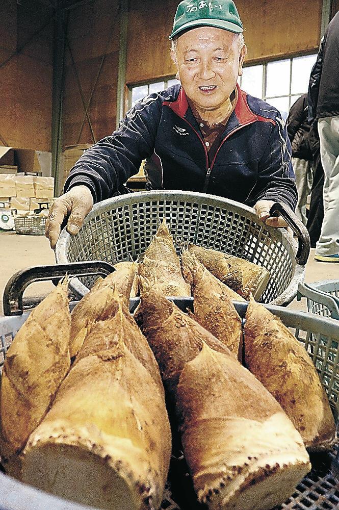 出荷が始まった地元産タケノコ=小松市内