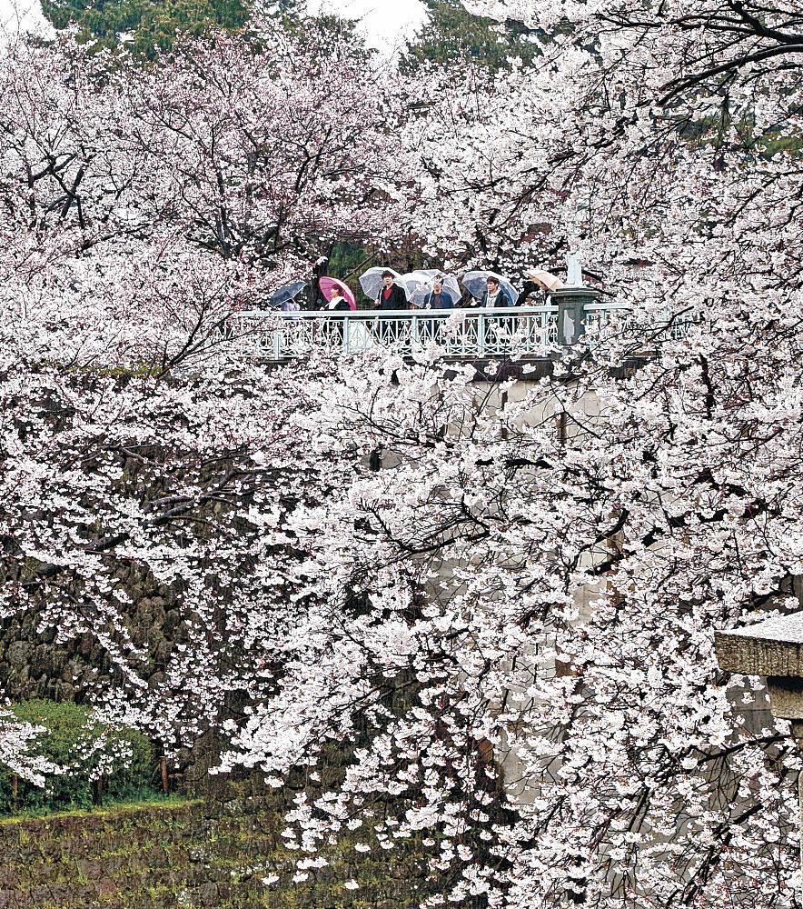 しっとりぬれた花に見入る来園者=金沢城公園