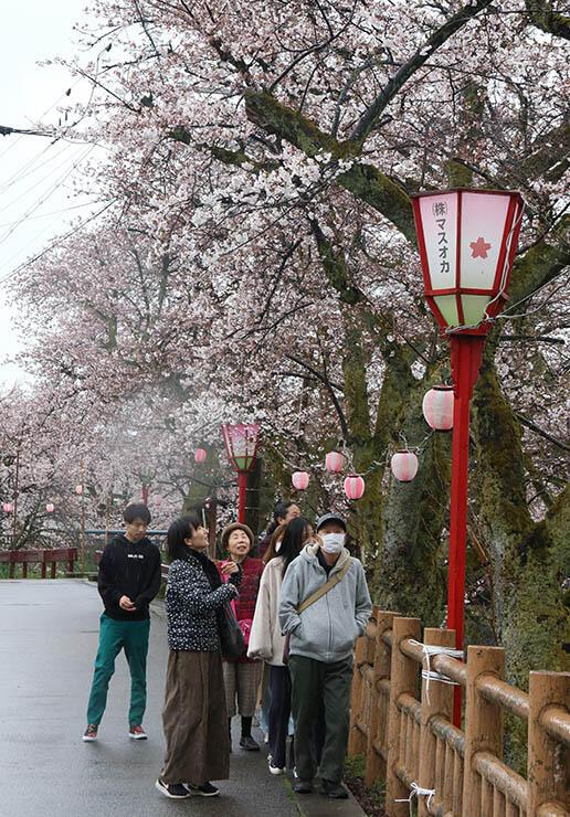 咲き始めたソメイヨシノを楽しむ家族連れ