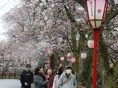 岸渡川の桜楽しんで 福岡さくらまつり開幕