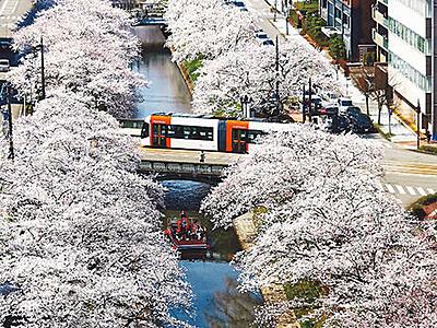 とやまの桜 松川(富山市)