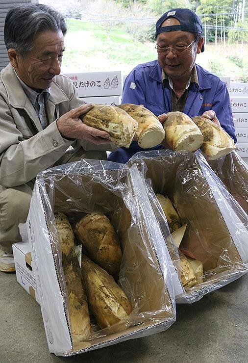 初出荷された粟原地区特産のタケノコ