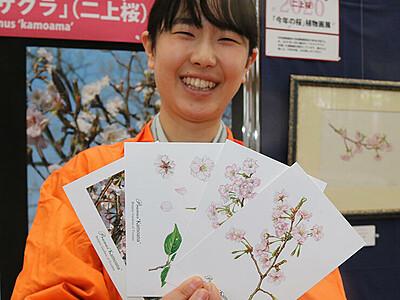 「今年の桜」フタカミザクラお薦め 県中央植物園、絵はがき販売