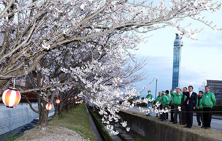 ぼんぼりに灯がともされた桜並木。右奥はクロスランドタワー