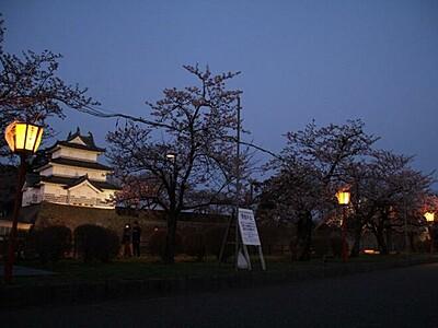 満開の桜、静かに輝き 新発田城址公園