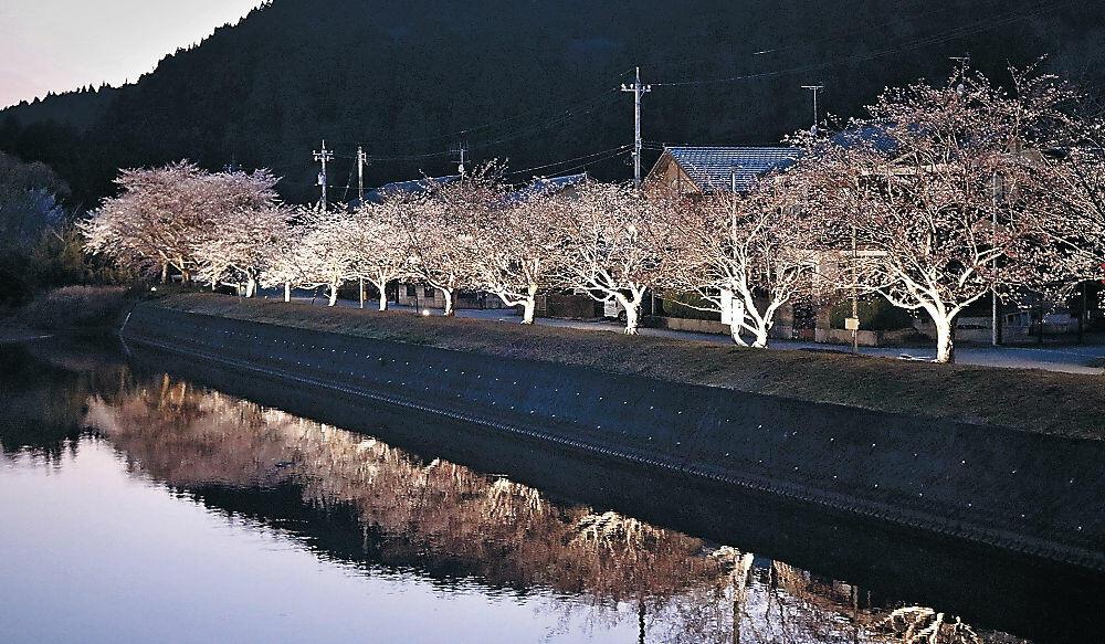 ライトアップされた夜桜=穴水町川島