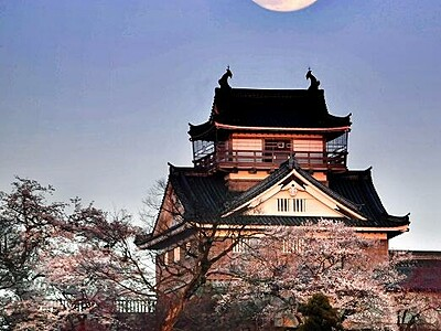 城と桜と月と 3種の美 出合う 福井・大野