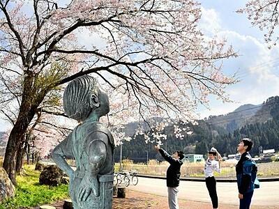 見上げれば春一色 福井県南越前町
