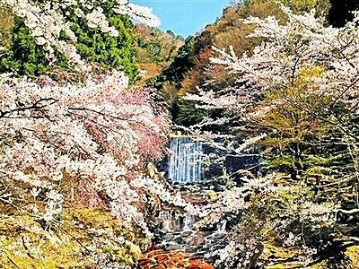 渓流と桜が織りなす春の美しい絶景 福井県若狭町三方