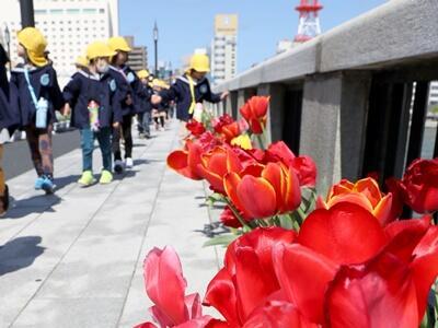 新潟市・萬代橋チューリップフェス開幕