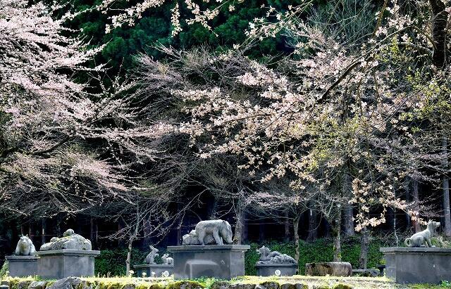 4月15日の福井県池田町稗田の稗田の里公園