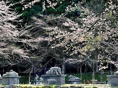 桜吹雪の中で干支の動物が宴 福井県池田町の稗田の里公園
