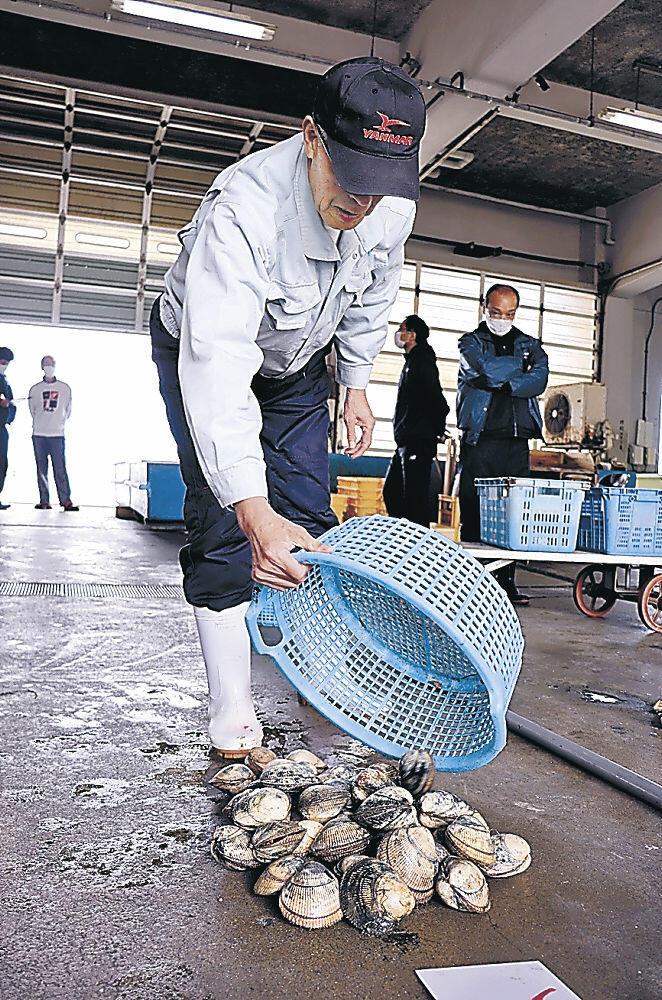 水揚げされたトリガイ=七尾市の石崎漁港