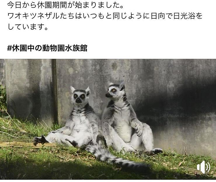 動物たちの様子を動画で発信している富山市ファミリーパークの公式フェイスブック(部分)