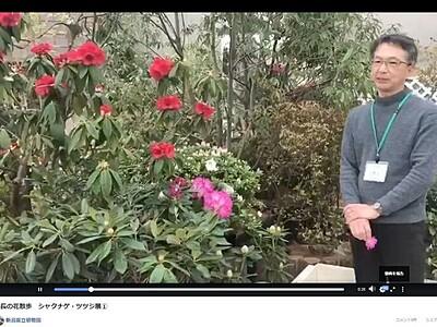 企画展中止の花々動画で配信 新潟市秋葉区・県立植物園