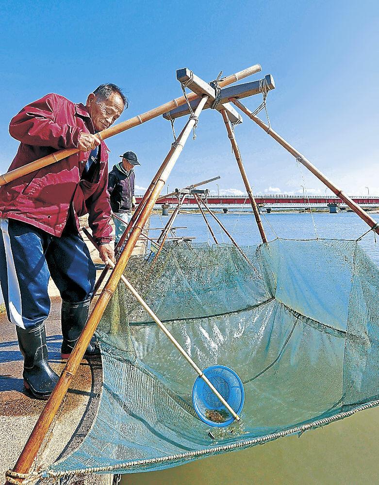 スベリ漁を行う会員=白山市の手取川河口網にかかったスベリ
