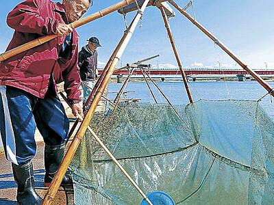 スベリ漁本格化 手取川「スベリ漁」本格化