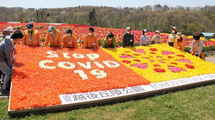 新型ウイルス終息の願いを込めたチューリップの花絵=25日、長岡市の国営越後丘陵公園