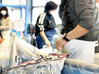 福井県産稚アユを初出荷 5月末までに100万匹