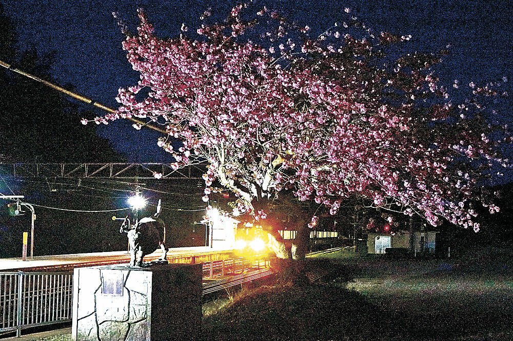 ライトアップされた「火牛の像」と八重桜=津幡町のIRいしかわ鉄道倶利伽羅駅