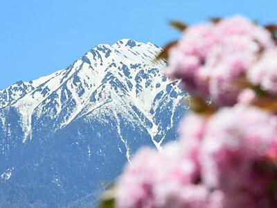 「常念坊」花に誘われ 安曇野から望む雪形