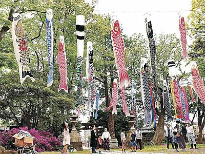 収束願い、こいのぼり30本悠々 金沢・安江住吉神社