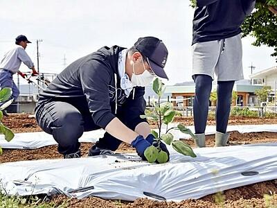 吉川ナス大きく育てて 鯖江市の生産者が学校に苗贈る