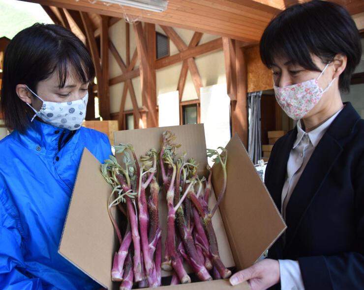 宅配する松本市奈川産のウド