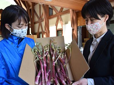 ウド・ワラビ...旬の味わい、ご自宅で 松本・奈川の直売所