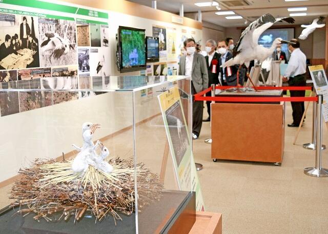 展示にコウノトリのひなの剥製などが加わったコウノトリPR館のリニューアル=5月18日、福井県越前市都辺町