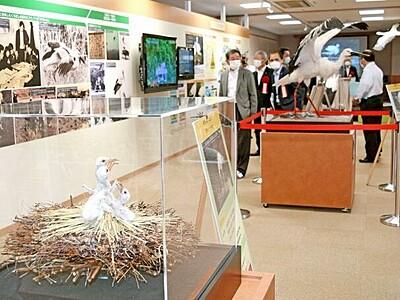 コウノトリPR館の展示を一新 福井県越前市 ひなの剥製も