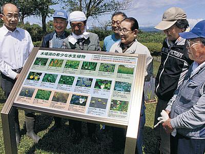 小松市の木場潟 水生植物の再生が進む