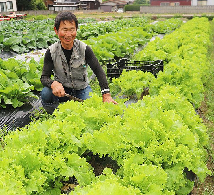 直売所近くの畑でシロナの収穫体験をスタートさせる泉野社長