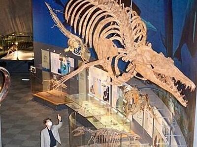 古代の巨大クジラ、HPで紹介福井県立恐竜博が展示更新
