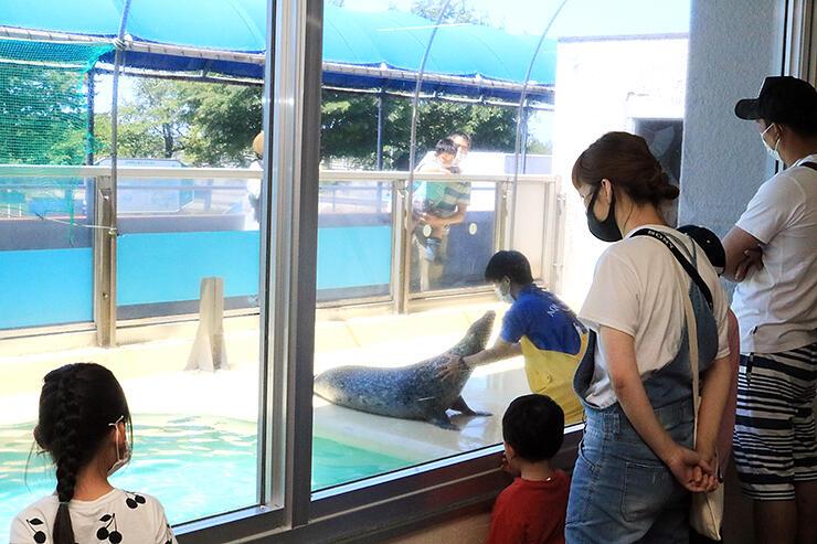アザラシの給餌が始まると自然とできた人だかり=魚津水族館