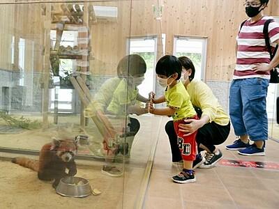 レッサーパンダ久しぶり 鯖江の西山動物園が再開