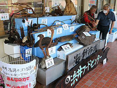 """流木の""""水族館""""登場 氷見の浜井フードセンター"""