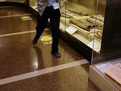 社会的距離、ナウマンゾウの歩幅で 信濃町の博物館
