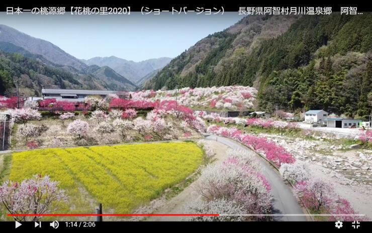 阿智村が配信している動画の一部。ハナモモと菜の花を上空からの目線で楽しめる