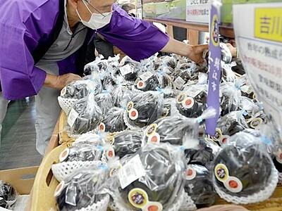 伝統野菜「吉川ナス」丸々大きく 鯖江で出荷始まる