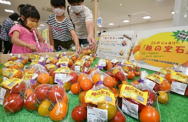 カラフルなミディトマトの3色セット「越の宝石(じゅえりー)」=6月13日、福井県福井市の喜ね舎愛菜館