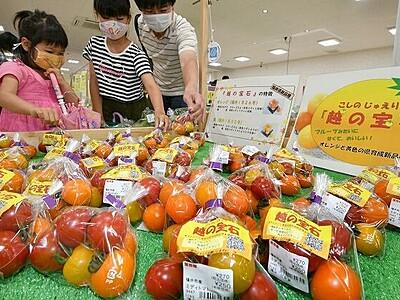 カラフルなミディトマトいかが 福井で「越の宝石」試験販売