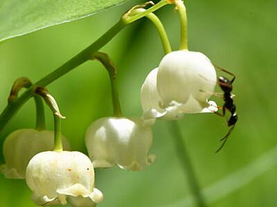 初夏色、入笠山に彩り 進む開花、希少種にも誘われて
