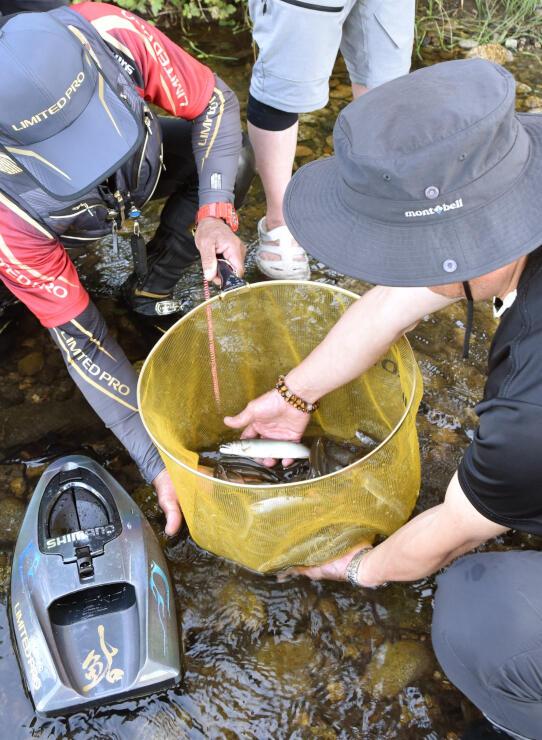 試し釣りしたアユの大きさを確認する三面川鮭産漁業協同組合員ら=村上市岩沢の三面川