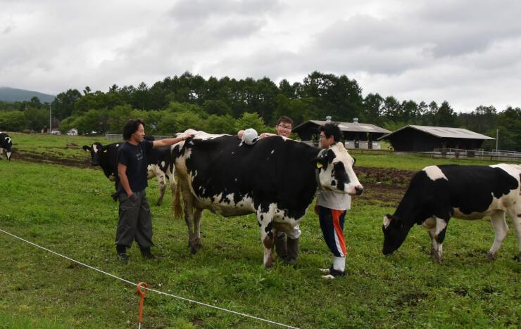 原村の八ケ岳中央農業実践大学校で放牧されている牛と学生たち=23日