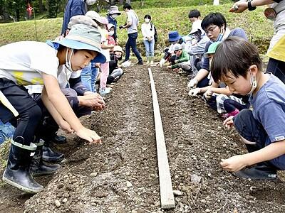 芋掘り、種まき...農村学校開校 池田町