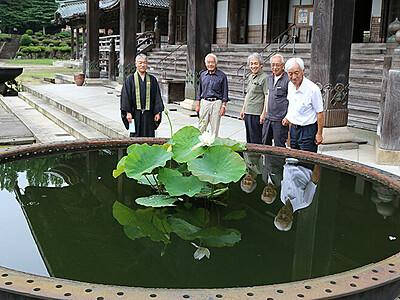天水鉢に浮くハスの花見頃 瑞泉寺