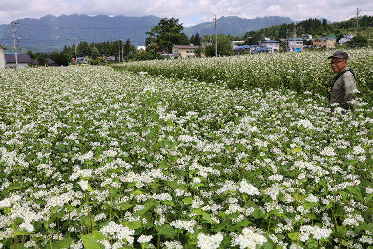 白い花に一面覆われた長野市戸隠のソバ畑