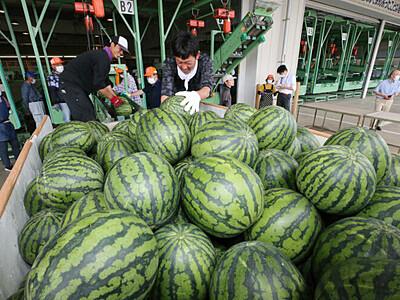 今年も自信、波田のスイカ 松本で選果・出荷始まる