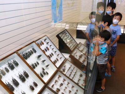世界のカブトムシ、クワガタムシ大集合 長岡・科学博物館